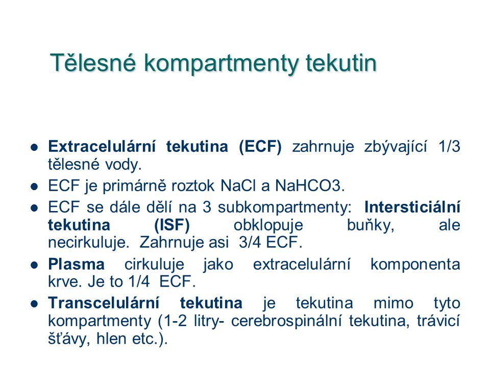 Tělesné kompartmenty tekutin Extracelulární tekutina (ECF) zahrnuje zbývající 1/3 tělesné vody. ECF je primárně roztok NaCl a NaHCO3. ECF se dále dělí