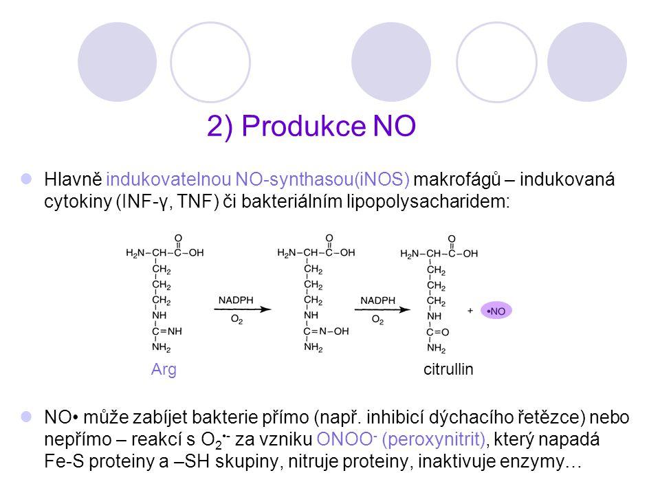 2) Produkce NO Hlavně indukovatelnou NO-synthasou(iNOS) makrofágů – indukovaná cytokiny (INF-γ, TNF) či bakteriálním lipopolysacharidem: NO může zabíj
