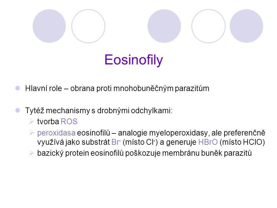 Eosinofily Hlavní role – obrana proti mnohobuněčným parazitům Tytéž mechanismy s drobnými odchylkami:  tvorba ROS  peroxidasa eosinofilů – analogie