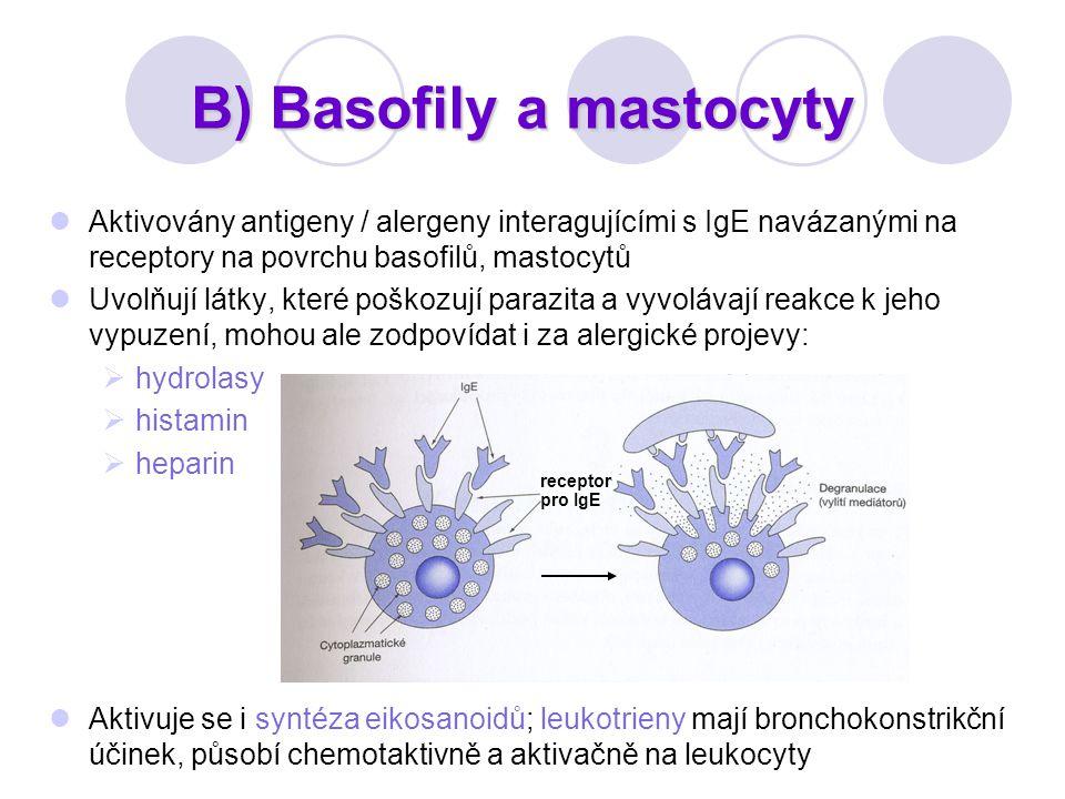 B) Basofily a mastocyty Aktivovány antigeny / alergeny interagujícími s IgE navázanými na receptory na povrchu basofilů, mastocytů Uvolňují látky, kte