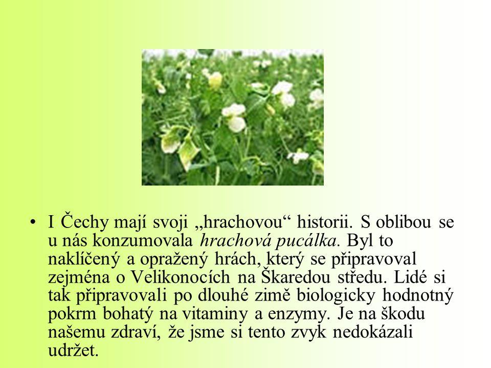 """I Čechy mají svoji """"hrachovou historii. S oblibou se u nás konzumovala hrachová pucálka."""