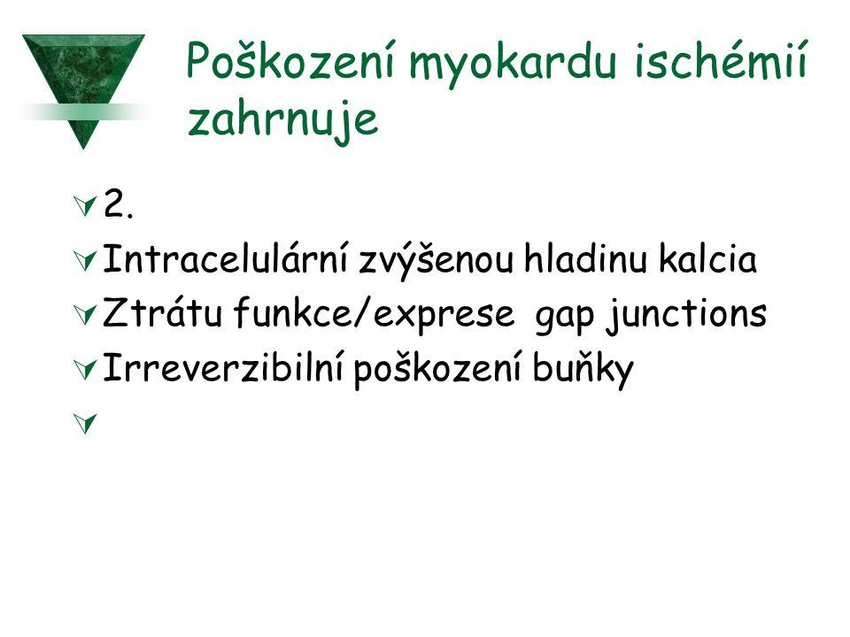Poškození myokardu ischémií zahrnuje  2.  Intracelulární zvýšenou hladinu kalcia  Ztrátu funkce/exprese gap junctions  Irreverzibilní poškození bu