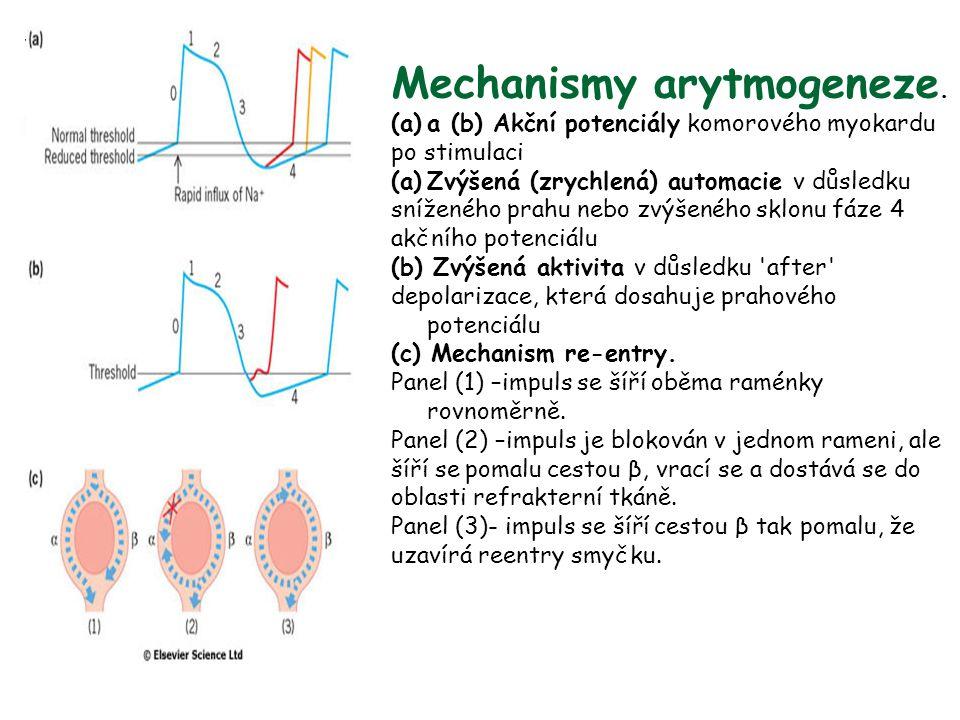 Mechanismy arytmogeneze. (a)a (b) Akční potenciály komorového myokardu po stimulaci (a)Zvýšená (zrychlená) automacie v důsledku sníženého prahu nebo z