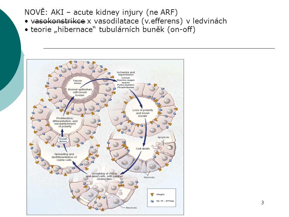 """3 NOVĚ: AKI – acute kidney injury (ne ARF) vasokonstrikce x vasodilatace (v.efferens) v ledvinách teorie """"hibernace"""" tubulárních buněk (on-off)"""