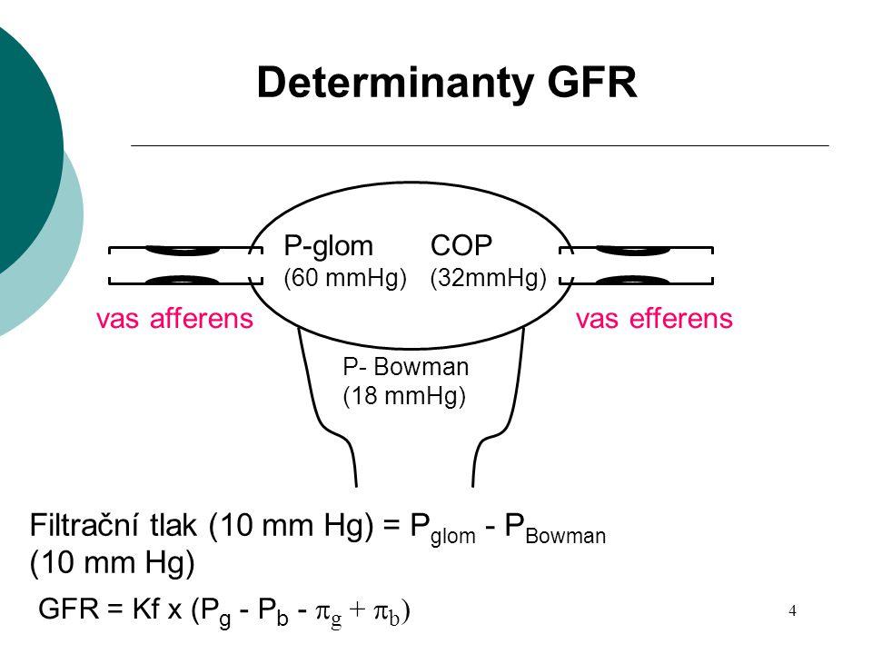 4 P-glom (60 mmHg) COP (32mmHg) P- Bowman (18 mmHg) Filtrační tlak (10 mm Hg) = P glom - P Bowman (10 mm Hg) GFR = Kf x (P g - P b -  g +  b ) Deter
