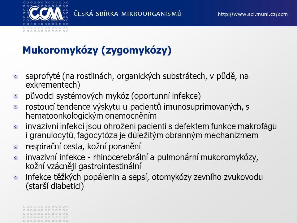 Mukoromykózy (zygomykózy) saprofyté (na rostlinách, organických substrátech, v půdě, na exkrementech) původci systémových mykóz (oportunní infekce) ro