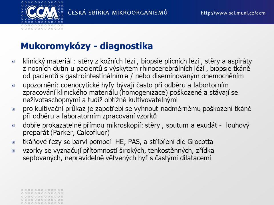 Mukoromykózy - diagnostika klinický materiál : stěry z kožních lézí, biopsie plicních lézí, stěry a aspiráty z nosních dutin u pacientů s výskytem rhi