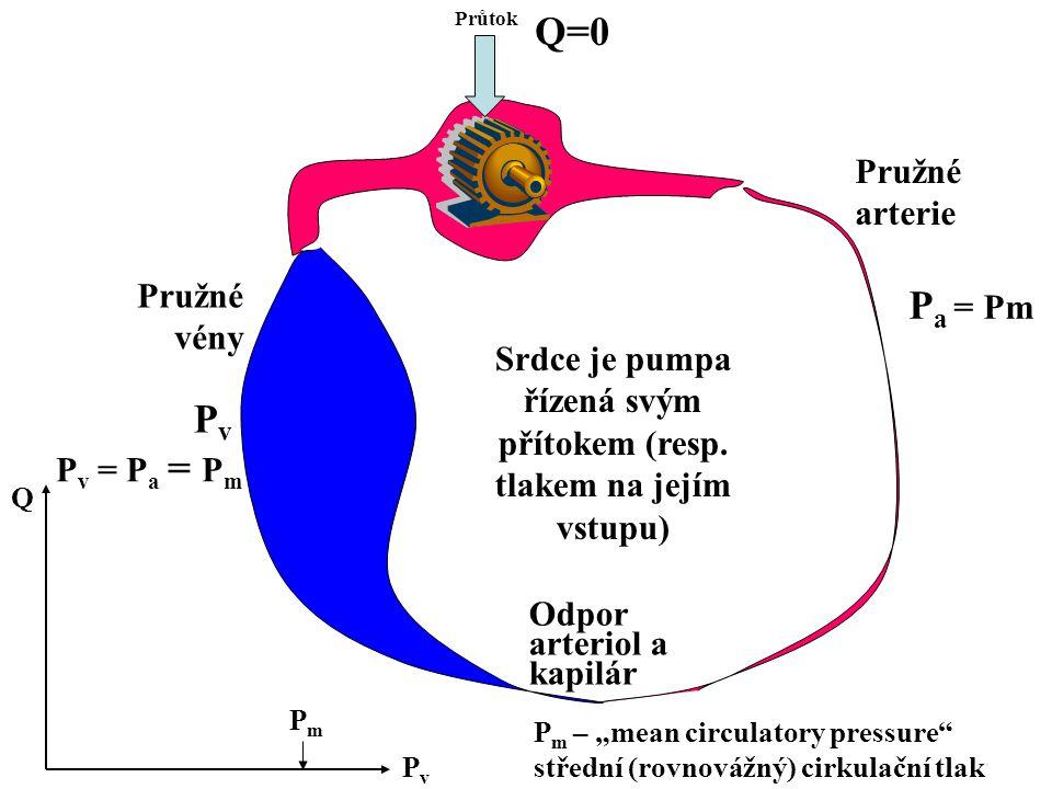 Srdce je pumpa řízená svým přítokem (resp. tlakem na jejím vstupu) Průtok Odpor arteriol a kapilár Pružné arterie Pružné vény PvPv P a = Pm Q=0 P v =