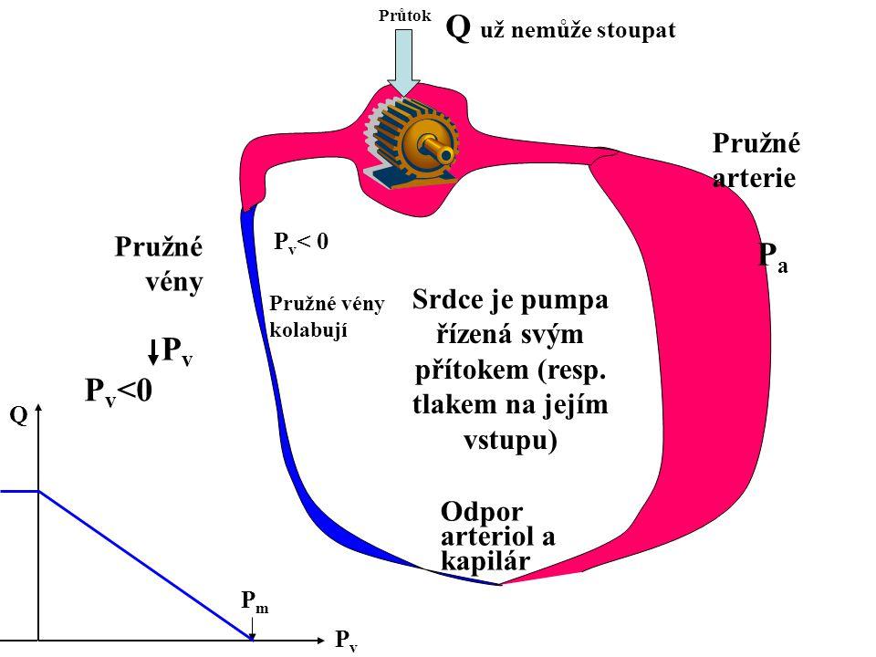 Srdce je pumpa řízená svým přítokem (resp. tlakem na jejím vstupu) Průtok Odpor arteriol a kapilár Pružné arterie Pružné vény PvPv PaPa P v <0 PvPv Q