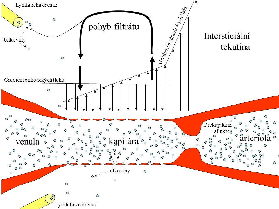 arteriola venula kapilára Gradient onkotických tlaků Gradient hydraulických tlaků Prekapilární sfinkter Lymfatická drenáž bílkoviny Intersticiální tekutina Hromadění filtrátu v intersticiu Zvýšení hydrostatického hydrostatickéhogradientu Městnání při kardiální insuficienci