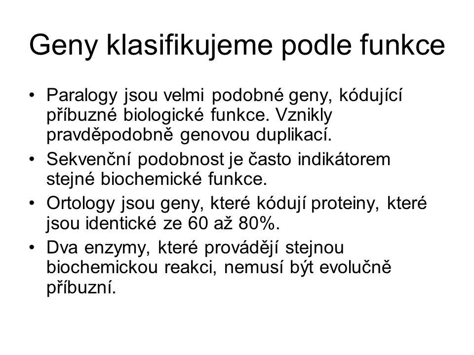 Geny klasifikujeme podle funkce Paralogy jsou velmi podobné geny, kódující příbuzné biologické funkce. Vznikly pravděpodobně genovou duplikací. Sekven