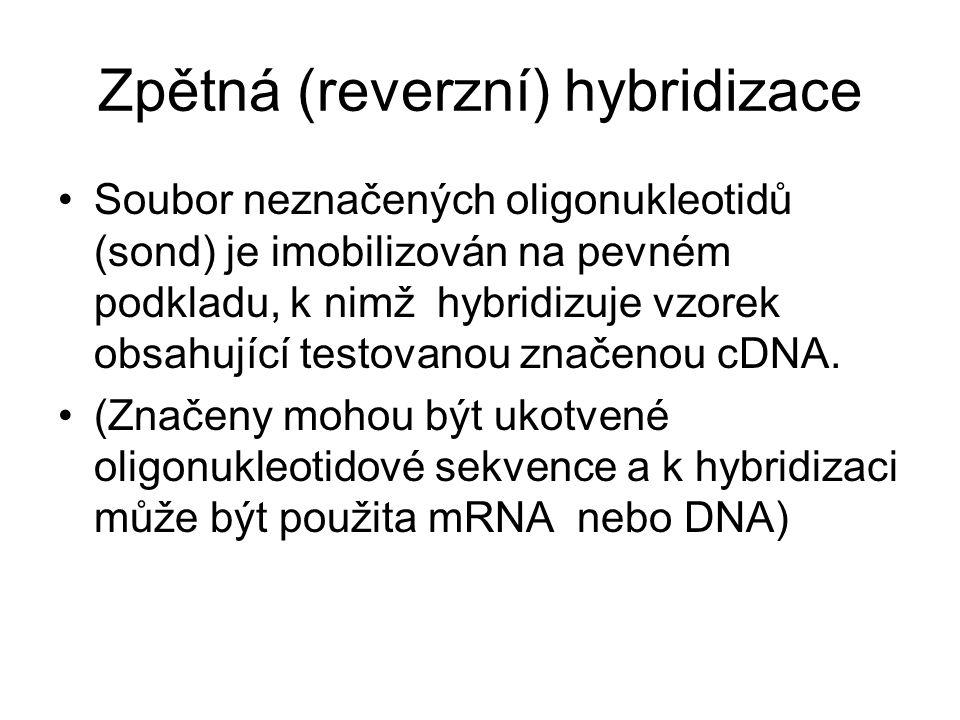 Zpětná (reverzní) hybridizace Soubor neznačených oligonukleotidů (sond) je imobilizován na pevném podkladu, k nimž hybridizuje vzorek obsahující testovanou značenou cDNA.