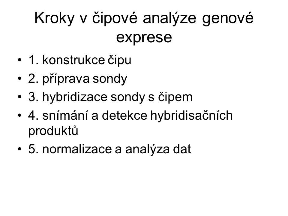 Kroky v čipové analýze genové exprese 1. konstrukce čipu 2. příprava sondy 3. hybridizace sondy s čipem 4. snímání a detekce hybridisačních produktů 5