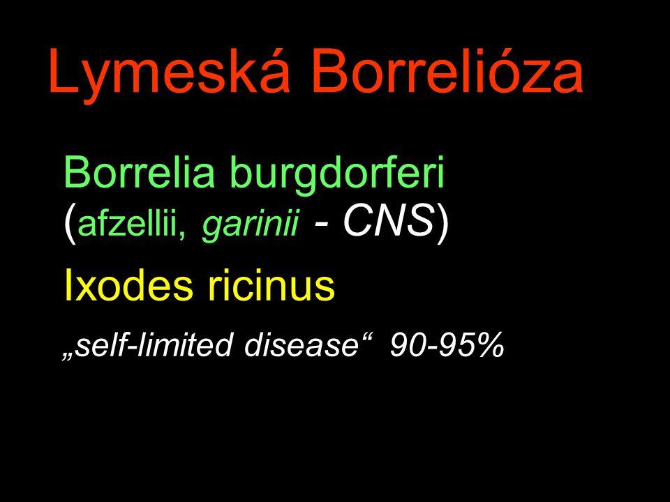 "Borrelia burgdorferi ( afzellii, garinii - CNS) Ixodes ricinus ""self-limited disease 90-95% Lymeská Borrelióza"