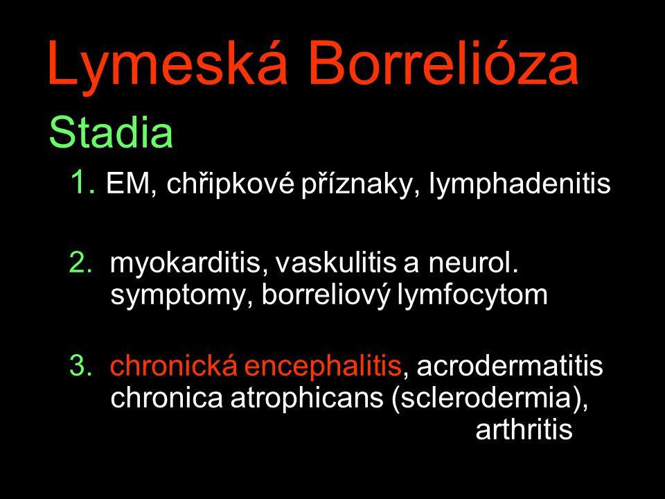 Stadia 1.EM, chřipkové příznaky, lymphadenitis 2.