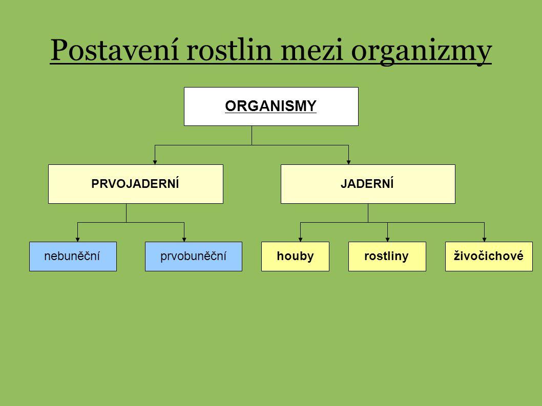 ROSTLINY ( Plantae ) NIŽŠÍ ( Protobionta ) VYŠŠÍ (Cormobionta ) R.