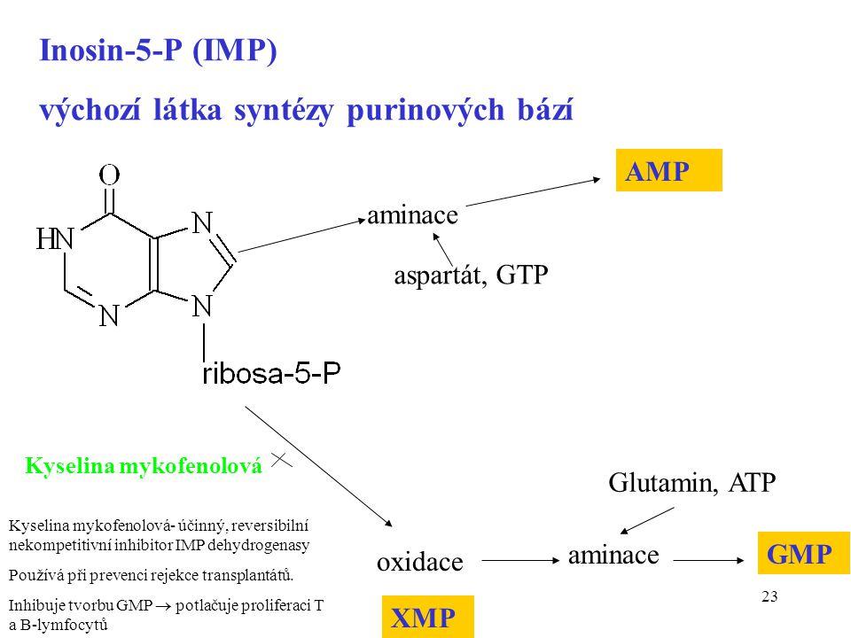 23 Inosin-5-P (IMP) výchozí látka syntézy purinových bází aspartát, GTP aminace AMP oxidace aminaceGMP Glutamin, ATP XMP Kyselina mykofenolová Kyselin