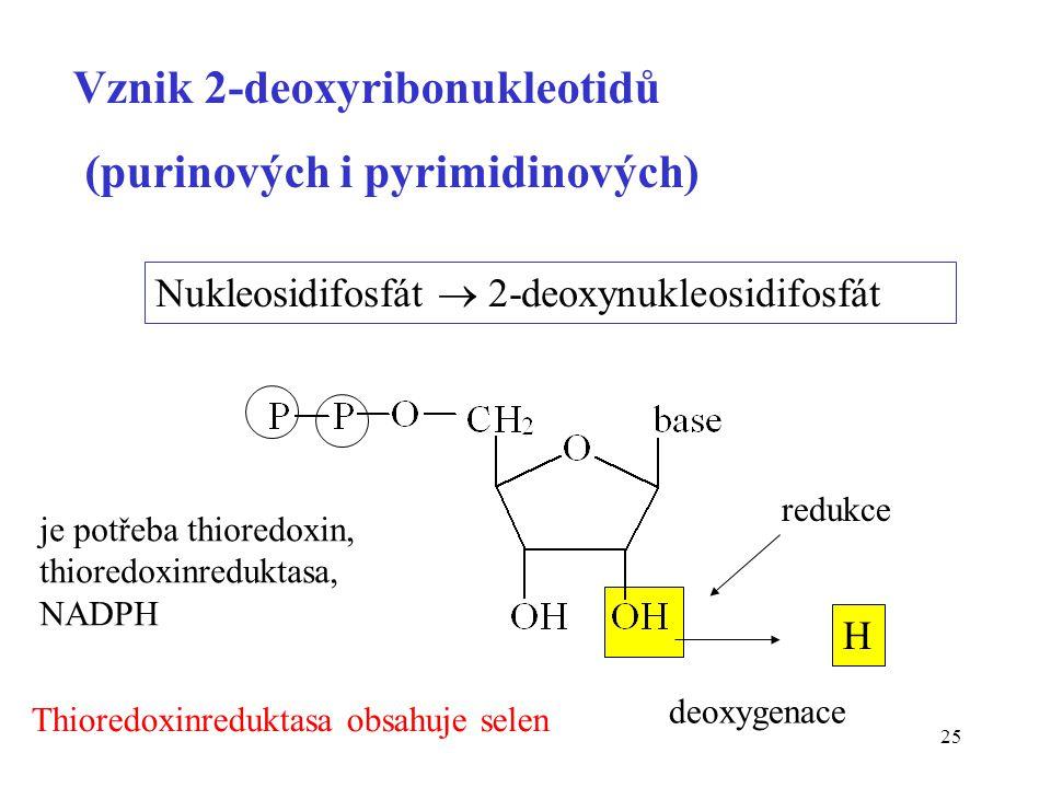 25 Vznik 2-deoxyribonukleotidů (purinových i pyrimidinových) Nukleosidifosfát  2-deoxynukleosidifosfát redukce je potřeba thioredoxin, thioredoxinred
