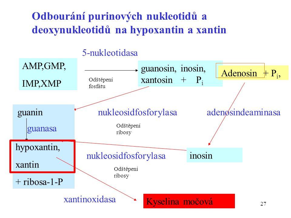 27 Odbourání purinových nukleotidů a deoxynukleotidů na hypoxantin a xantin AMP,GMP, IMP,XMP 5-nukleotidasa guanosin, inosin, xantosin + P i nukleosid