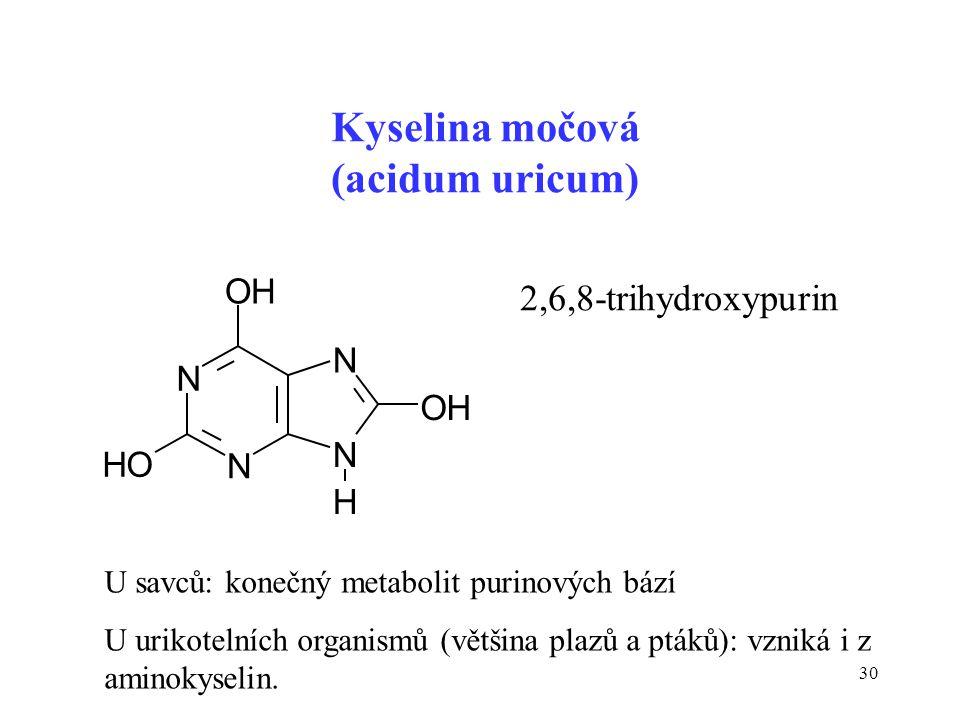 30 N N OH N N H OH HO Kyselina močová (acidum uricum) U savců: konečný metabolit purinových bází U urikotelních organismů (většina plazů a ptáků): vzn