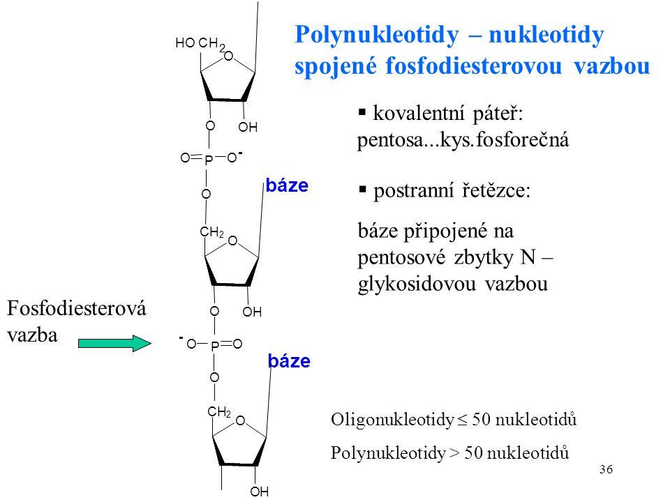 36 Oligonukleotidy  50 nukleotidů Polynukleotidy > 50 nukleotidů  kovalentní páteř: pentosa...kys.fosforečná Polynukleotidy – nukleotidy spojené fos