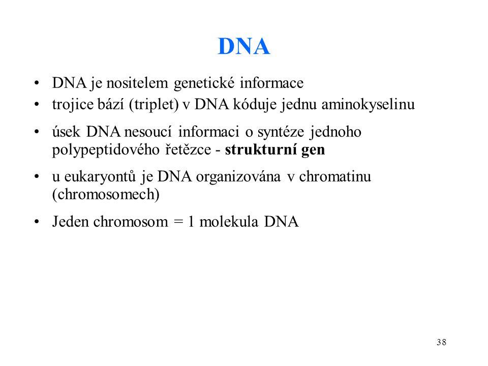 38 DNA DNA je nositelem genetické informace trojice bází (triplet) v DNA kóduje jednu aminokyselinu úsek DNA nesoucí informaci o syntéze jednoho polyp