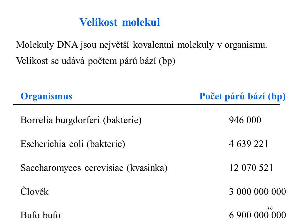 39 Molekuly DNA jsou největší kovalentní molekuly v organismu. Velikost se udává počtem párů bází (bp) OrganismusPočet párů bází (bp) Borrelia burgdor