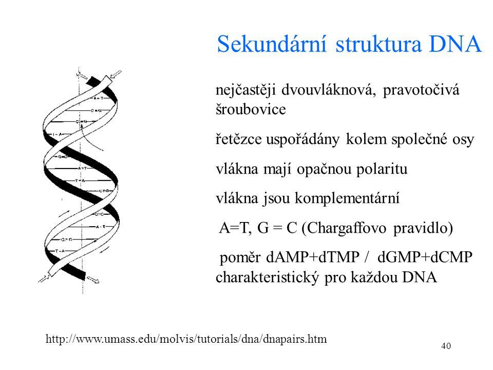 40 Sekundární struktura DNA nejčastěji dvouvláknová, pravotočivá šroubovice řetězce uspořádány kolem společné osy vlákna mají opačnou polaritu vlákna