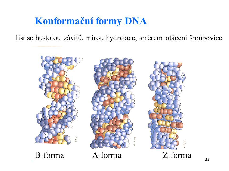 44 Konformační formy DNA B-formaA-formaZ-forma liší se hustotou závitů, mírou hydratace, směrem otáčení šroubovice