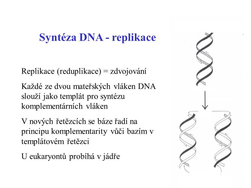 51 Syntéza DNA - replikace Replikace (reduplikace) = zdvojování Každé ze dvou mateřských vláken DNA slouží jako templát pro syntézu komplementárních v