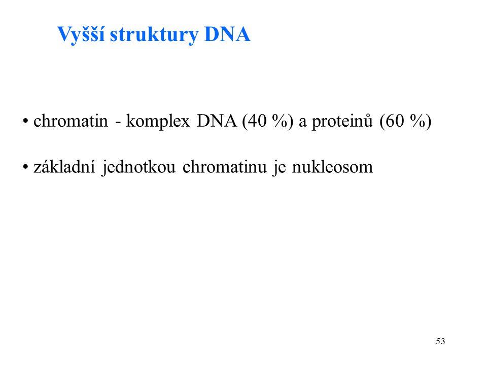 53 Vyšší struktury DNA chromatin - komplex DNA (40 %) a proteinů (60 %) základní jednotkou chromatinu je nukleosom