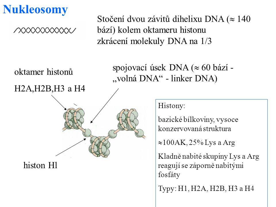 54 Nukleosomy Histony: bazické bílkoviny, vysoce konzervovaná struktura  100AK, 25% Lys a Arg Kladně nabité skupiny Lys a Arg reagují se záporně nabi