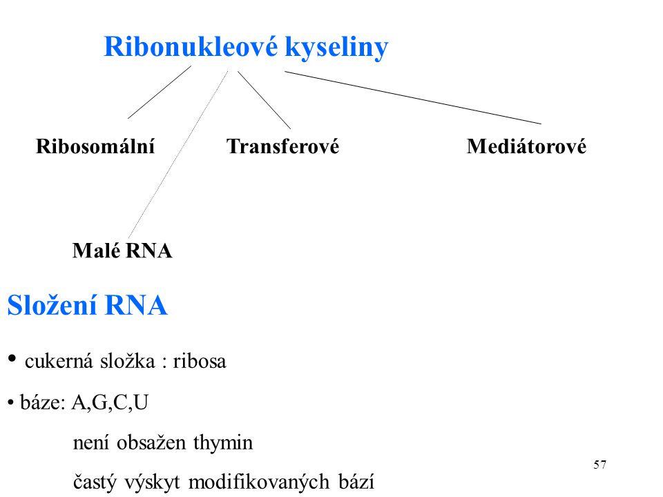 57 Ribonukleové kyseliny Ribosomální Transferové Mediátorové Malé RNA Složení RNA cukerná složka : ribosa báze: A,G,C,U není obsažen thymin častý výsk