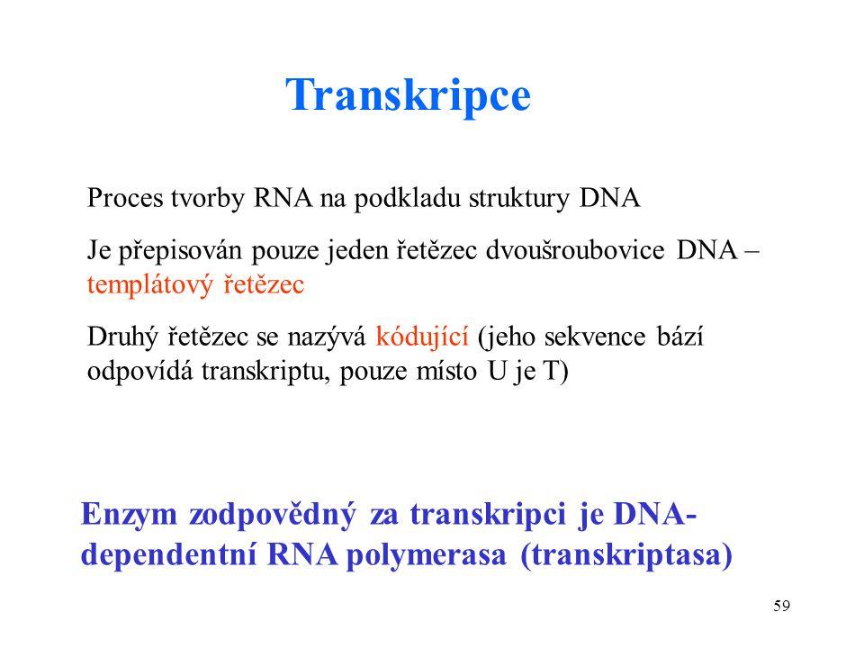 59 Proces tvorby RNA na podkladu struktury DNA Je přepisován pouze jeden řetězec dvoušroubovice DNA – templátový řetězec Druhý řetězec se nazývá kóduj