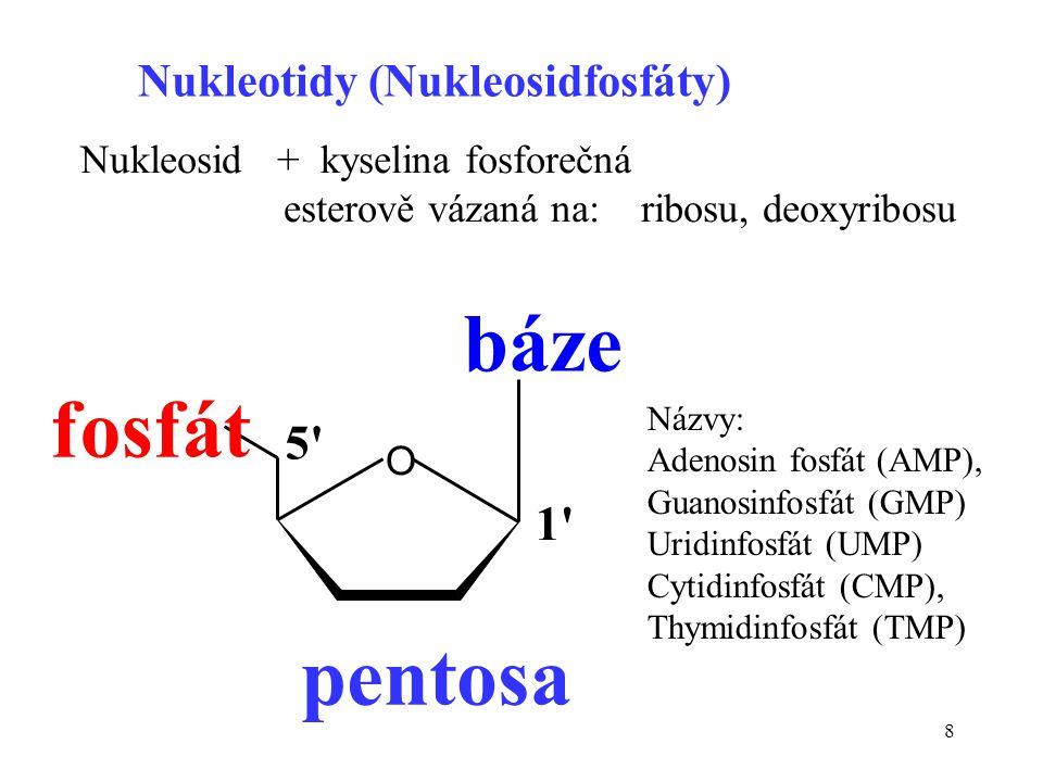 8 Nukleotidy (Nukleosidfosfáty) Nukleosid + kyselina fosforečná esterově vázaná na: ribosu, deoxyribosu O báze pentosa fosfát 1' 5' Názvy: Adenosin fo
