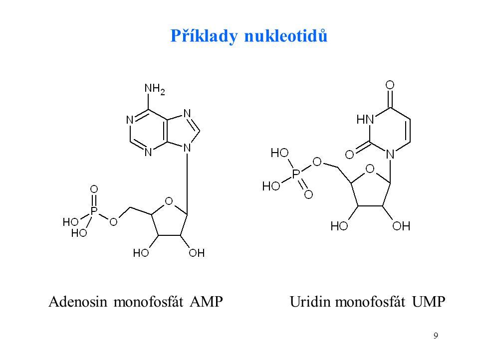 9 Adenosin monofosfát AMPUridin monofosfát UMP Příklady nukleotidů