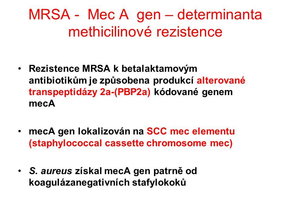 MRSA - Mec A gen – determinanta methicilinové rezistence Rezistence MRSA k betalaktamovým antibiotikům je způsobena produkcí alterované transpeptidázy 2a-(PBP2a) kódované genem mecA mecA gen lokalizován na SCC mec elementu (staphylococcal cassette chromosome mec) S.