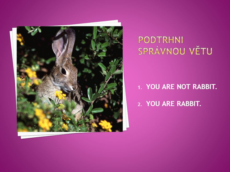 1. YOU ARE NOT RABBIT. 2. YOU ARE RABBIT.