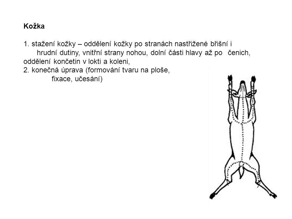 Kožka 1. stažení kožky – oddělení kožky po stranách nastřižené břišní i hrudní dutiny, vnitřní strany nohou, dolní části hlavy až po čenich, oddělení