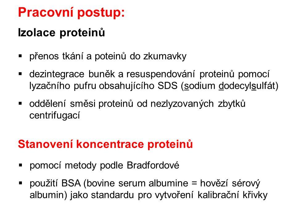 Izolace proteinů  přenos tkání a poteinů do zkumavky s  dezintegrace buněk a resuspendování proteinů pomocí lyzačního pufru obsahujícího SDS (sodium