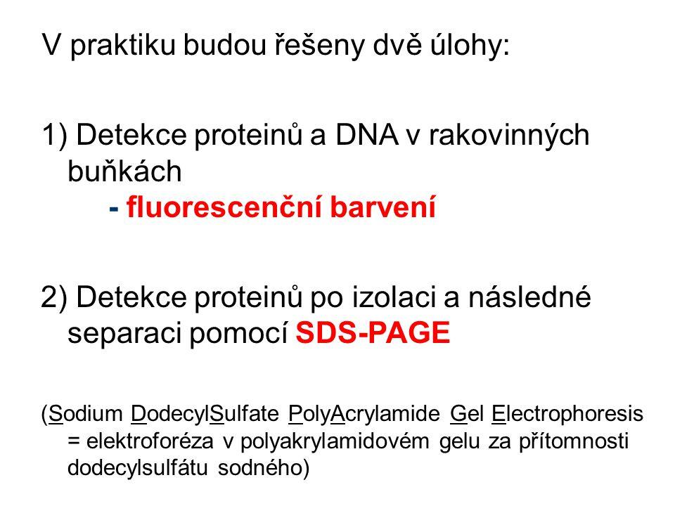 1) Detekce proteinů a DNA v rakovinných buňkách - fluorescenční barvení 2) Detekce proteinů po izolaci a následné separaci pomocí SDS-PAGE (Sodium Dod