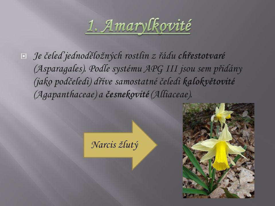  Je čeleď jednoděložných rostlin z řádu chřestotvaré (Asparagales).