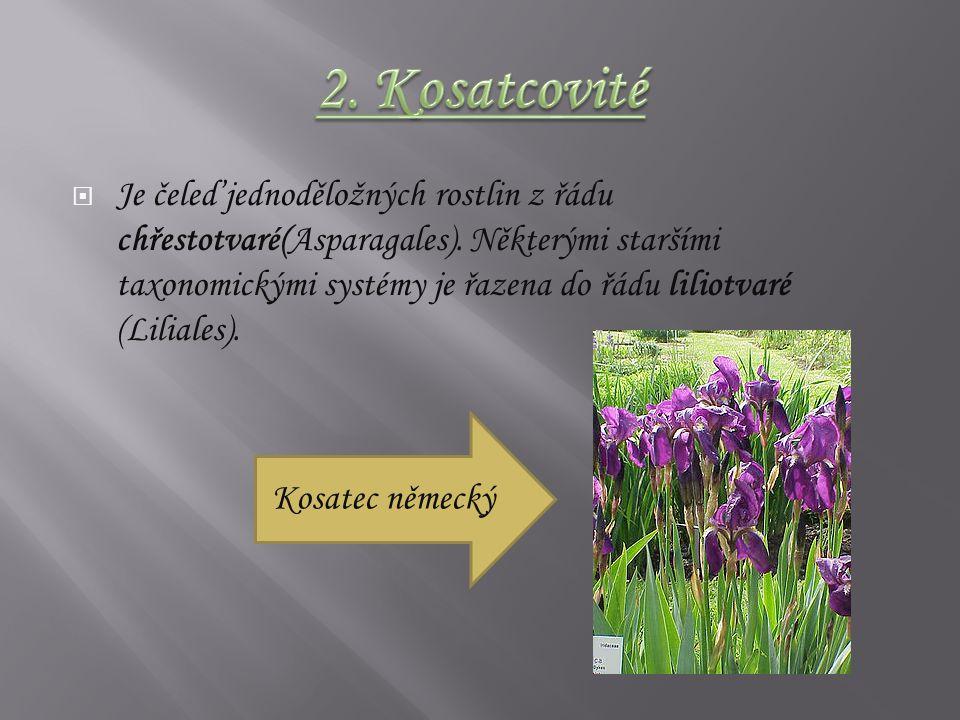 Je čeleď jednoděložných rostlin z řádu chřestotvaré(Asparagales).