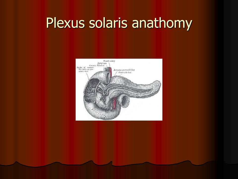 Plexus solaris anathomy