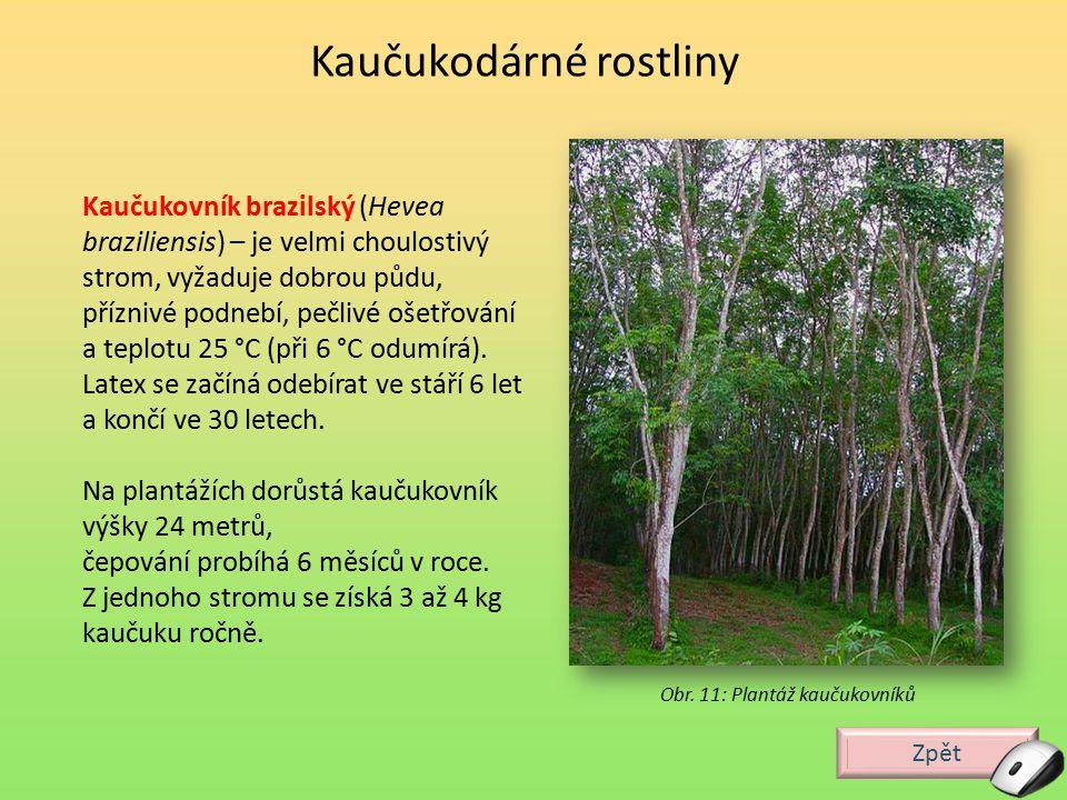 Zpět Kaučukodárné rostliny Kaučukovník brazilský (Hevea braziliensis) – je velmi choulostivý strom, vyžaduje dobrou půdu, příznivé podnebí, pečlivé oš