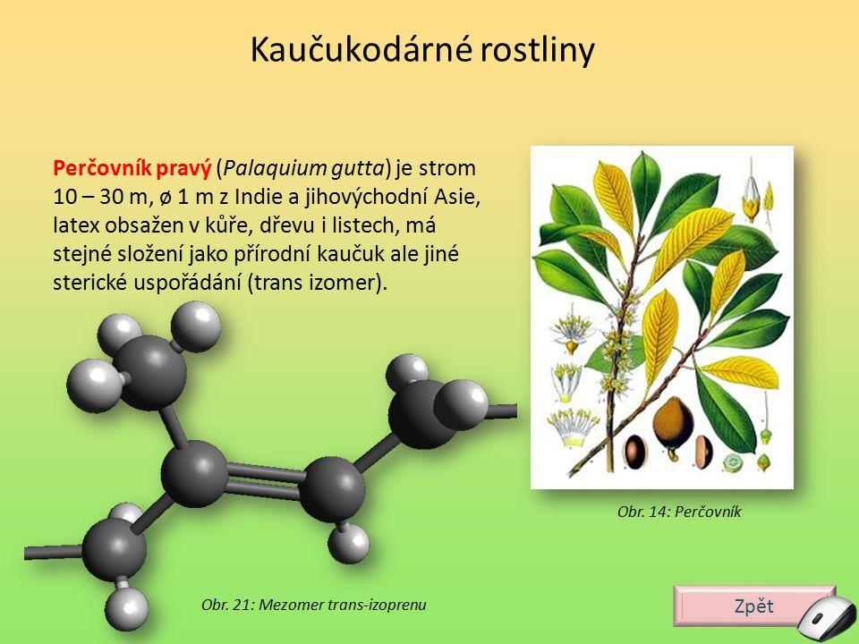 Zpět Perčovník pravý (Palaquium gutta) je strom 10 – 30 m, ø 1 m z Indie a jihovýchodní Asie, latex obsažen v kůře, dřevu i listech, má stejné složení
