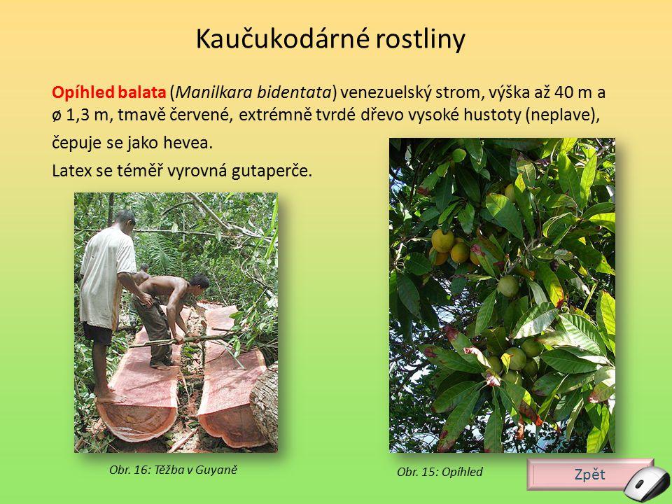 Zpět Obr. 16: Těžba v Guyaně Opíhled balata (Manilkara bidentata) venezuelský strom, výška až 40 m a ø 1,3 m, tmavě červené, extrémně tvrdé dřevo vyso
