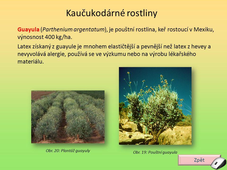 Zpět Guayula (Parthenium argentatum), je pouštní rostlina, keř rostoucí v Mexiku, výnosnost 400 kg/ha. Latex získaný z guayule je mnohem elastičtější