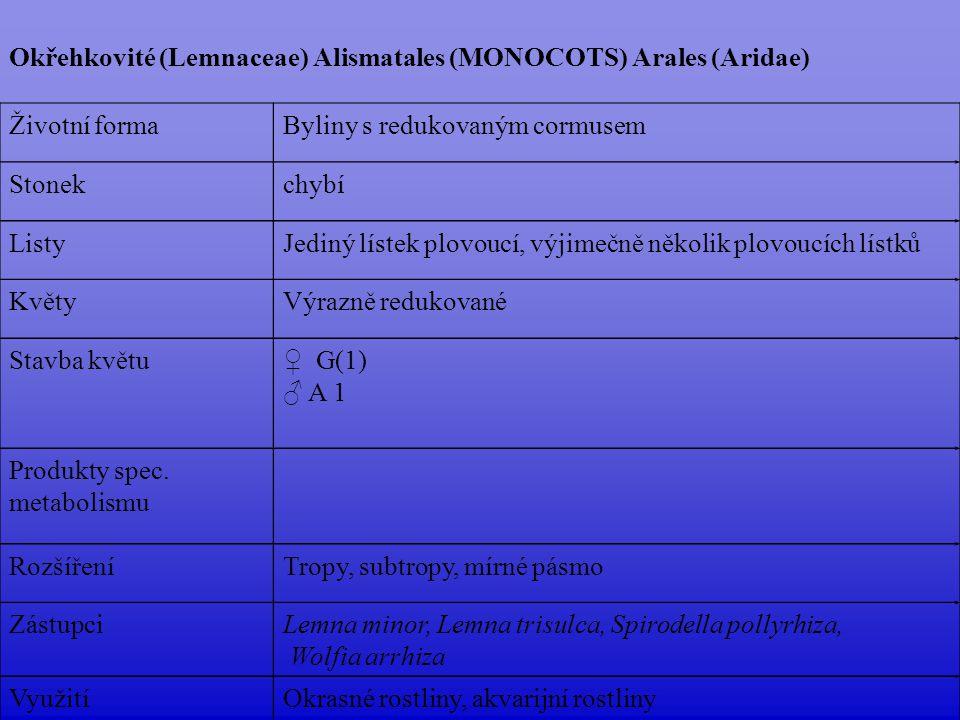 Okřehkovité (Lemnaceae) Alismatales (MONOCOTS) Arales (Aridae) Životní formaByliny s redukovaným cormusem Stonekchybí ListyJediný lístek plovoucí, výj