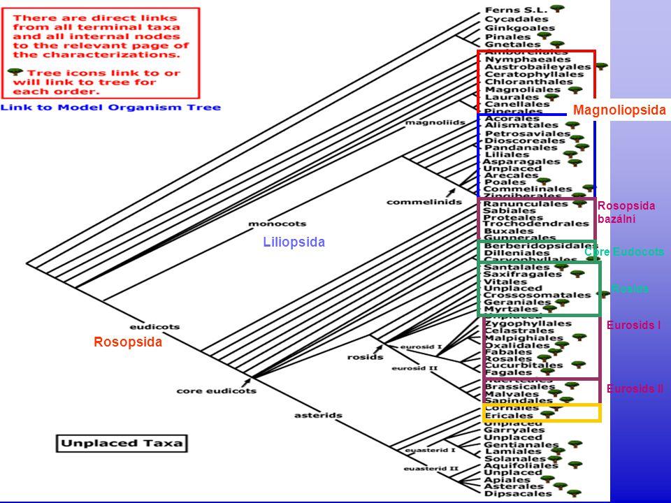 """ květy """"oboupohlavné  výrazná redukce celé rostliny  listovitý, málo diferencovaný prýt  turiony Lemnaceae  4/35; kosmopolitní  (subtropické oblasti jižní polokoule)  vodní derivát Araceae Lemna minor, Spirodela polyrhiza Wolffia arhiza"""